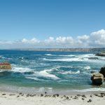 Seal Nursery San Diego Creature Project